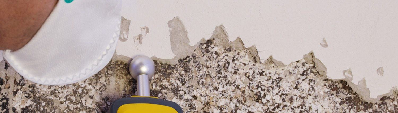 Pest controler gauges a mold infestation