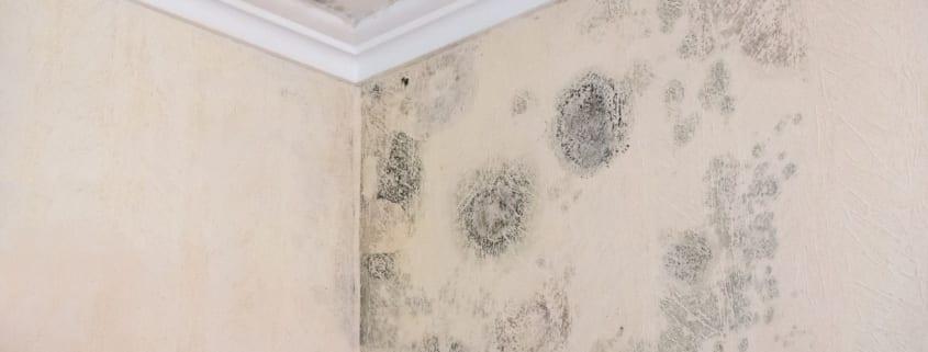 Schimmel in Wohnräumen - Das Bausachverständigenbüro Rüdiger Meixner